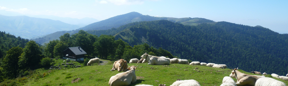 Paysage-Vache